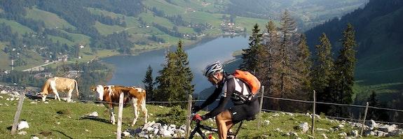 Natur pur am Schwarzsee