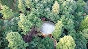 Cabane dans le bois: Image 2