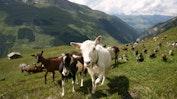 3-Sterne Hotel Alpina Vals: Bild 15