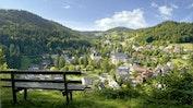 Schwarzwaldnatur: Bild 4