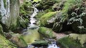 Bayerische Wald: Bild 17