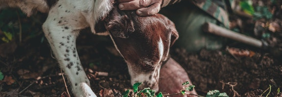Chasse aux truffes dans le Piémont