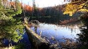 Bayerische Wald: Bild 20