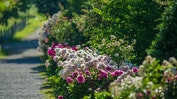 Prächtige Gärten: Bild 16