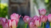 Prächtige Gärten: Bild 17