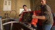 Weindegustation in Clessé: Bild 2