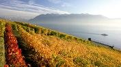 Lausanne - Gastfreundlich und reich an Kultur: Bild 22