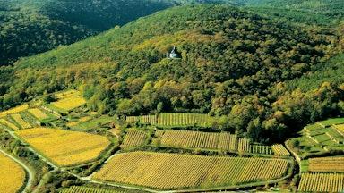 Deidesheim an der Deutschen Weinstrasse: Bild 8