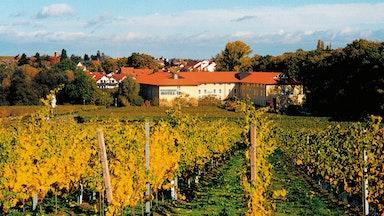 Deidesheim an der Deutschen Weinstrasse: Bild 3
