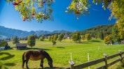 Wander- und Langlaufhotel Almfrieden****: Bild 11